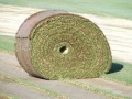 Big roll of sod