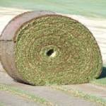 big roll